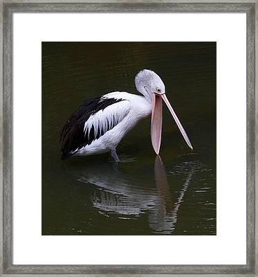 Hopeful Pelican Framed Print by Margaret Saheed