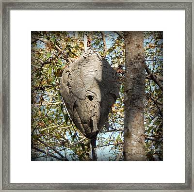 Hornets Hive Framed Print by Lynn Griffin