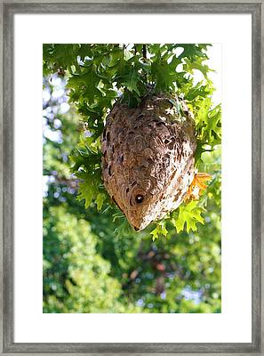 Hornets Nest Framed Print by Karen Silvestri