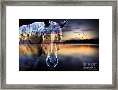 Horse 6 Framed Print by Mark Ashkenazi