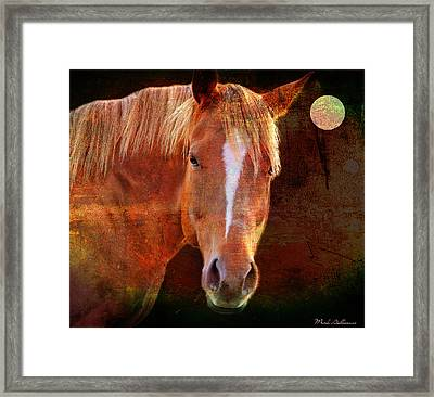 Horse 7 Framed Print by Mark Ashkenazi