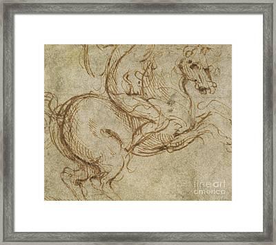 Horse And Cavalier Framed Print by Leonardo da Vinci