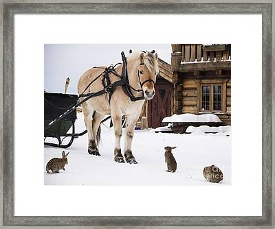 Horse And Rabbits Framed Print by Gry Thunes