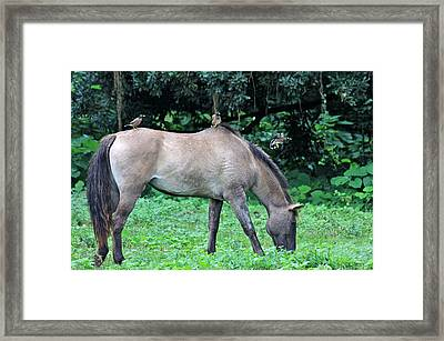 Horse And Three Myna Birds Framed Print by Karon Melillo DeVega