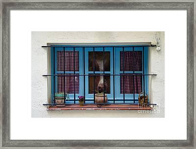 Horse Behind The Window Framed Print by Victoria Herrera