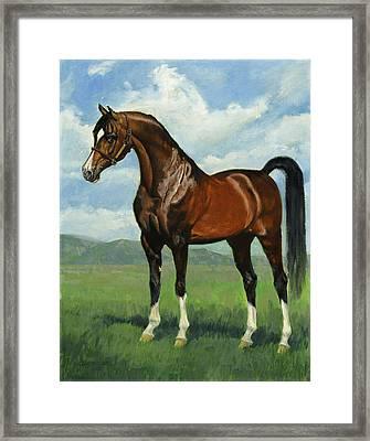 Khemosabi Champion Horse Framed Print by Don  Langeneckert