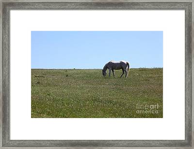 Horse Hill Mill Valley California 5d22664 Framed Print by Wingsdomain Art and Photography