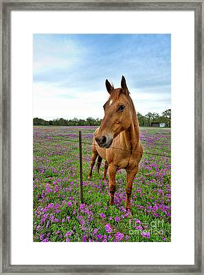 Horse In Phlox Framed Print by Tod and Cynthia Grubbs