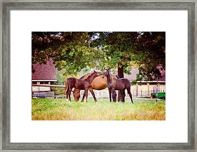 Horse Kisses Framed Print by Donna Doherty