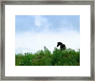 Horse On The Hill Framed Print by Joan Davis