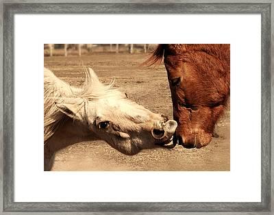 Horse Play Framed Print by Steven Milner