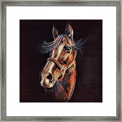 Horse Portrait  Framed Print by Daliana Pacuraru