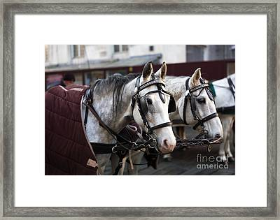 Horse Portrait In Vienna Framed Print by John Rizzuto