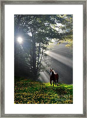 Horse Running In Dandelion Field With Streaming Sunlight Framed Print by Dan Friend