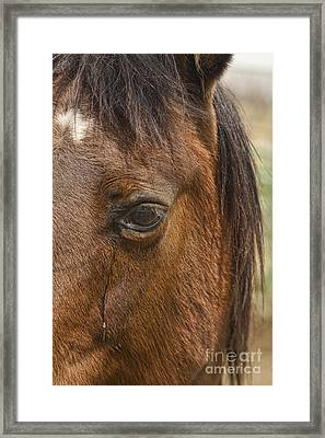 Horse Tear Framed Print by James BO  Insogna
