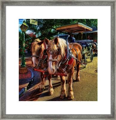 Horses - The Clydesdale Stallions Framed Print by Lee Dos Santos
