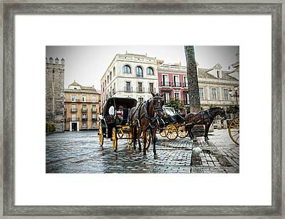Horses  Framed Print by Alicia Morales