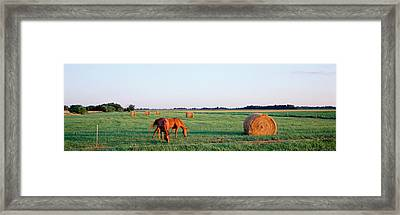 Horses And Hay, Marion County Framed Print by Panoramic Images
