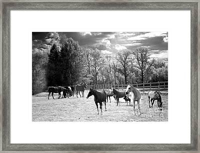 Horses Black And White Infrared - Surreal Horses Black White Nature Landscape Equine Framed Print by Kathy Fornal