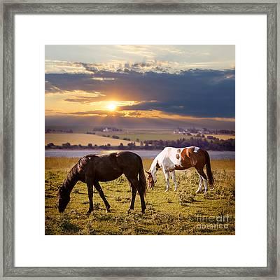Horses Grazing At Sunset Framed Print by Elena Elisseeva