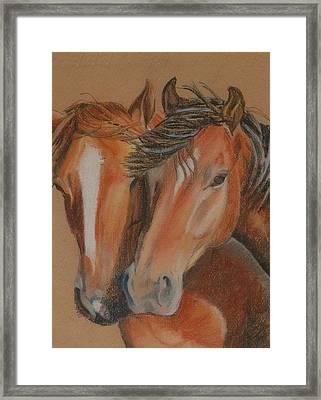 Horses Looking At You Framed Print by Teresa Smith