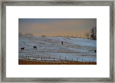 Horses On The Farm In Winter Framed Print by Dan Sproul