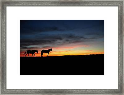 Horses Walking In The Sunset Framed Print by Aged Pixel