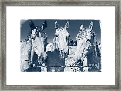 Horsing Around Framed Print by Edward Fielding