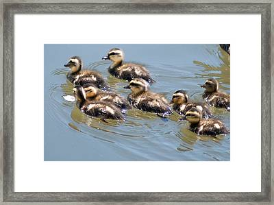 Hot Chicks Out For A Swim Framed Print by Optical Playground By MP Ray