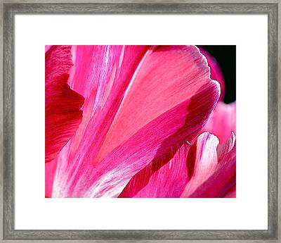 Hot Pink Framed Print by Rona Black