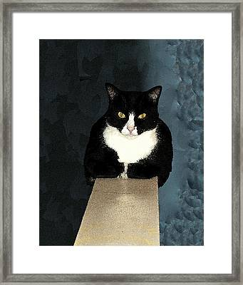 House Cat Framed Print by Don Allen