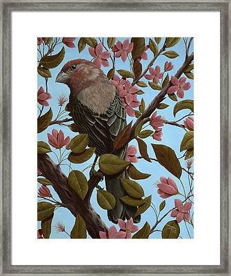 House Finch Framed Print by Rick Bainbridge