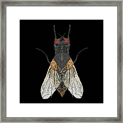 House Fly Bedazzled Framed Print by R  Allen Swezey