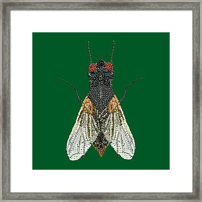 House Fly In Green Framed Print by R  Allen Swezey