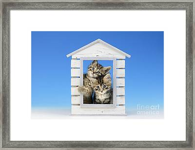 House Of Kittens Ck528 Framed Print by Greg Cuddiford