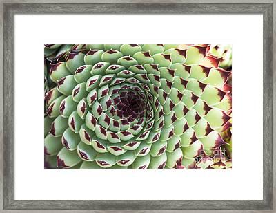 Houseleek Pattern Framed Print by Tim Gainey
