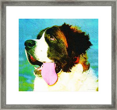 How Bout A Kiss - St Bernard Art By Sharon Cummings Framed Print by Sharon Cummings