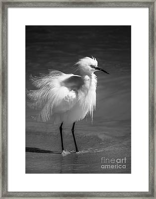 How Do I Look- Bw Framed Print by Marvin Spates