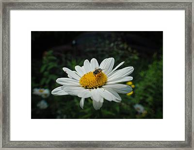 How Doth The Little Busy Bee Framed Print by Laura Pineda