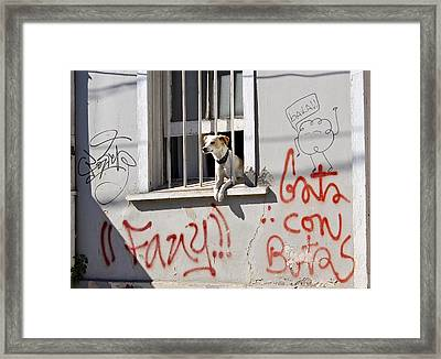 How Much Is That Doggie In The Window? Framed Print by Kurt Van Wagner