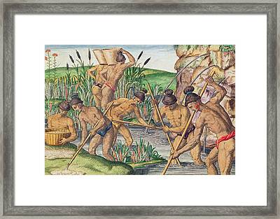 How The Indians Collect Gold From The Streams Framed Print by Jacques Le Moyne