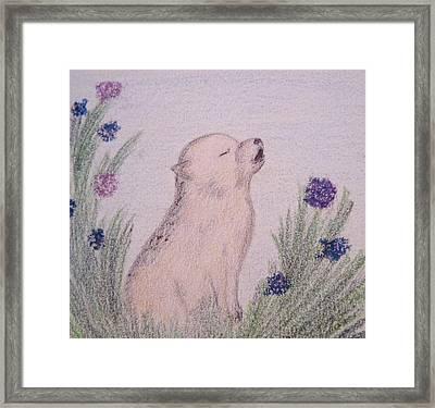 Howling Wolf Pup Framed Print by Christine Corretti