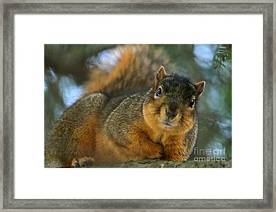 How's This Pose Framed Print by Jay Nodianos