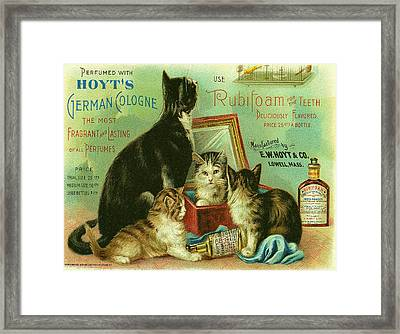 Hoyts Cats Framed Print by Georgia Fowler