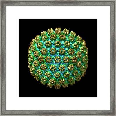 Human Cytomegalovirus Framed Print by Louise Hughes