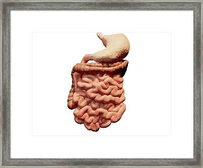 Human Digestive System Framed Print by Juan Gaertner