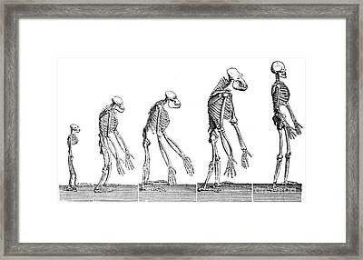 Human Evolution 1883 Framed Print by British Library
