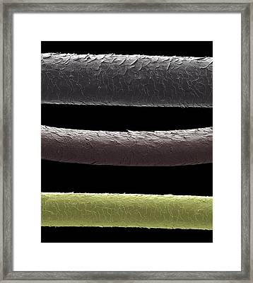 Human Hairs Framed Print by Steve Gschmeissner