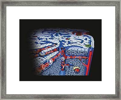 Human Liver Tissue Framed Print by Dorling Kindersley/uig