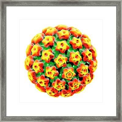 Human Papilloma Virus Framed Print by Louise Hughes